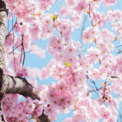 Frühlingskonzert vom Volkschor Nossen