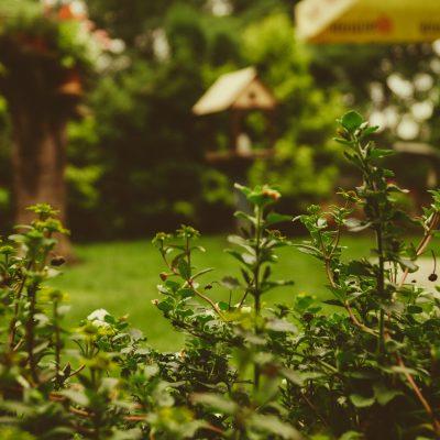 Offener Garten in Nossen und Umgebung
